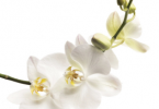 Natural Remedies - Flower Remedy