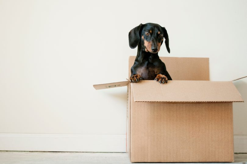 Moving Diaries: Ways to Settle in a New Place