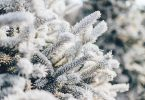 5 Ways to Avoid the Brutal Winter Allergies Now