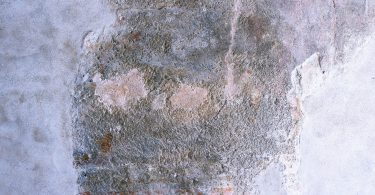What's The Importance of A Mold Inspection In Your Home?