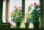Best Low-Maintenance Houseplants
