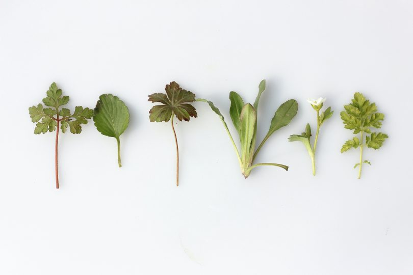 Top Herbal Remedies to Cope with Stress and Anxiety