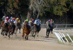 Four Factors that Determine Speed in Horses