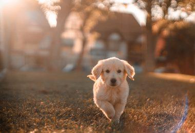 Dog Seizures: Causes, Symptoms & Treatment